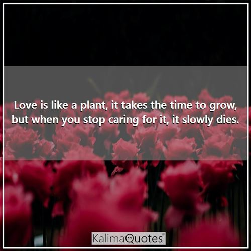 Love is like a plant, it takes the time to grow, but when you stop caring for it, it slowly dies.