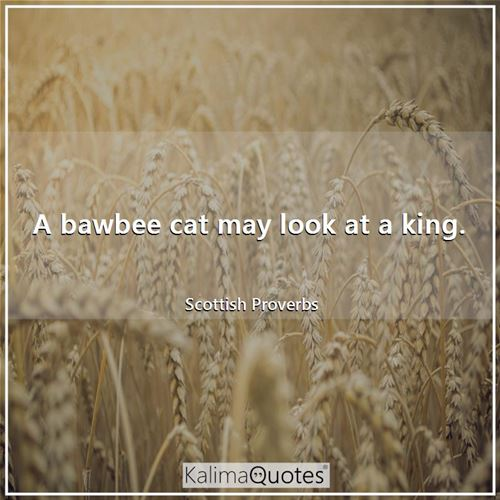 A bawbee cat may look at a king.