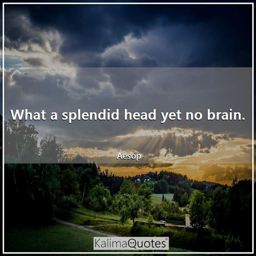 What a splendid head yet no brain.