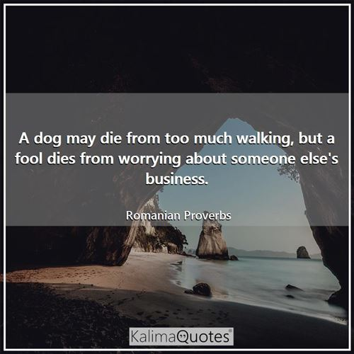 A dog may die from too much walking, but a fool dies from worrying about someone else's business.