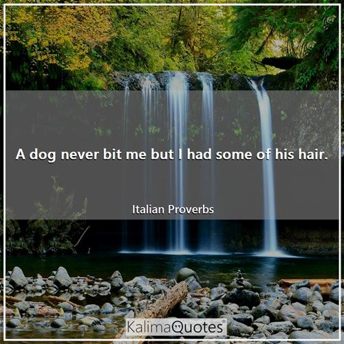 A dog never bit me but I had some of his hair. - Italian Proverbs