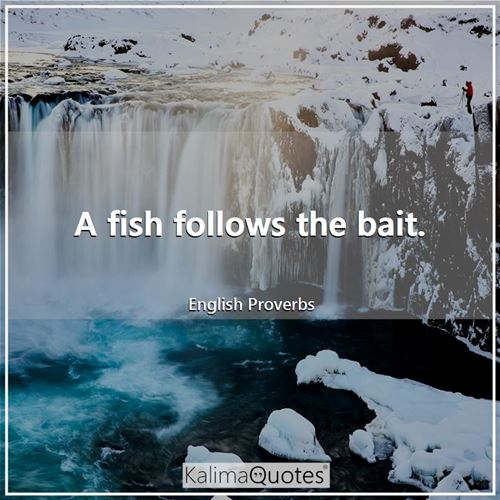 A fish follows the bait. - English Proverbs