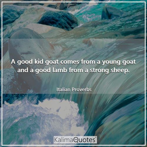A good kid goat comes from a young goat and a good lamb from a strong sheep. - Italian Proverbs