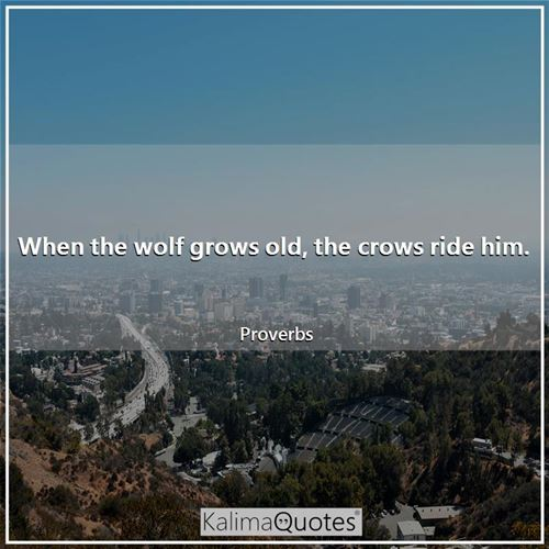 When the wolf grows old, the crows ride him. - Proverbs