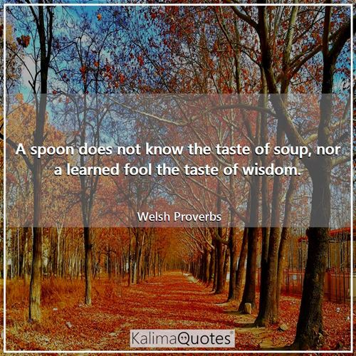 A spoon does not know the taste of soup, nor a learned fool the taste of wisdom.