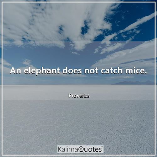 An elephant does not catch mice.