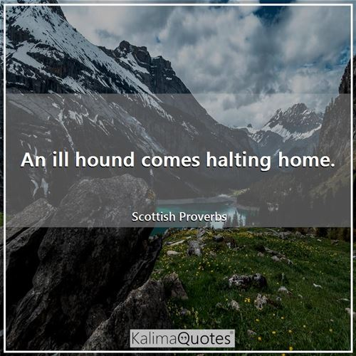 An ill hound comes halting home.