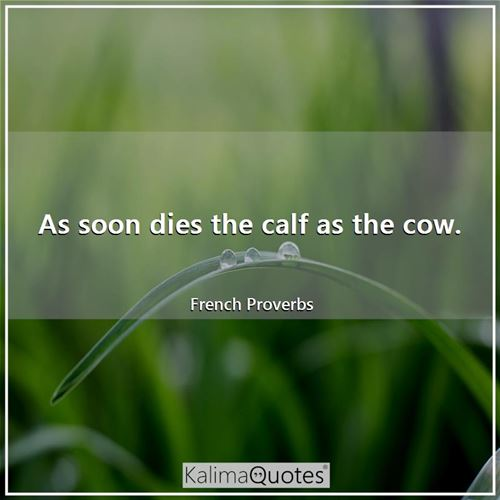 As soon dies the calf as the cow. - French Proverbs
