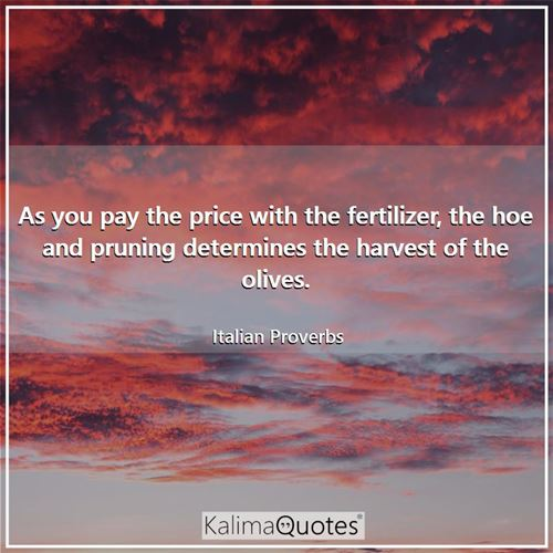 As you pay the price with the fertilizer, the hoe and pruning determines the harvest of the olives.