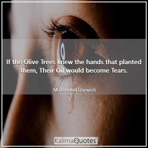 If the Olive Trees knew the hands that planted them, Their Oil would become Tears.