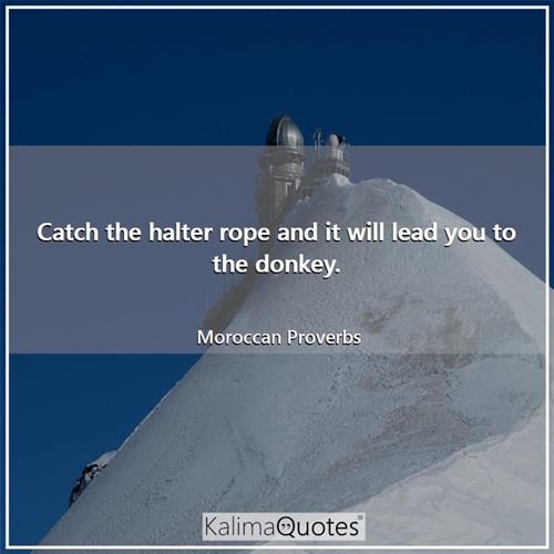 Catch the halter rope and it will lead you to the donkey. - Moroccan Proverbs