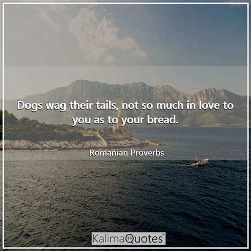 Dogs wag their tails, not so much in love to you as to your bread.