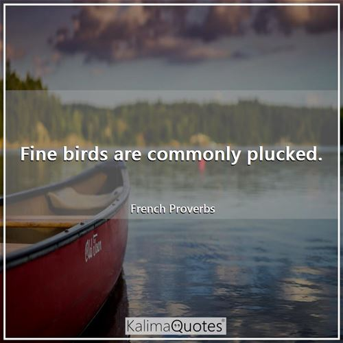 Fine birds are commonly plucked.