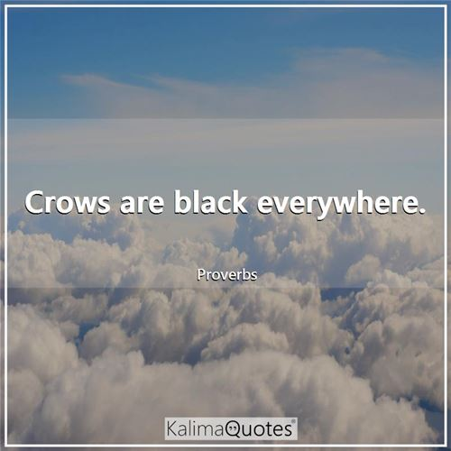 Crows are black everywhere.