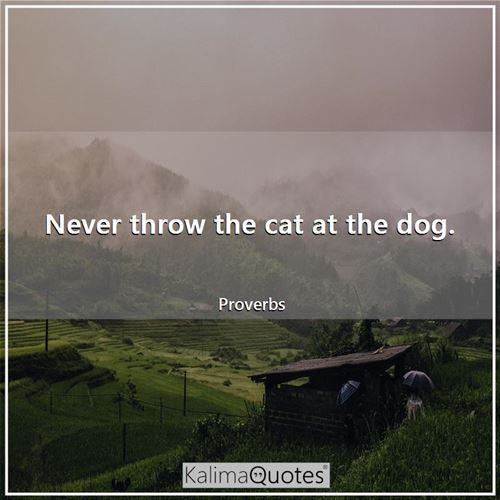 Never throw the cat at the dog.