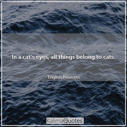 In a cat's eyes, all things belong to cats.