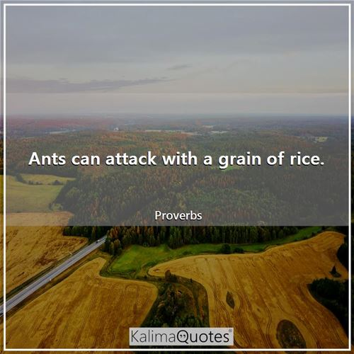 Ants can attack with a grain of rice.