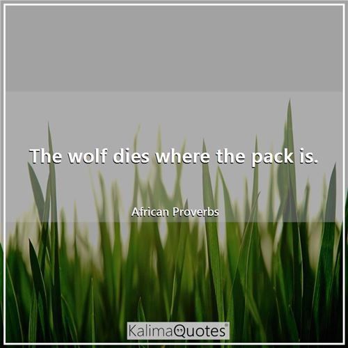 The wolf dies where the pack is.