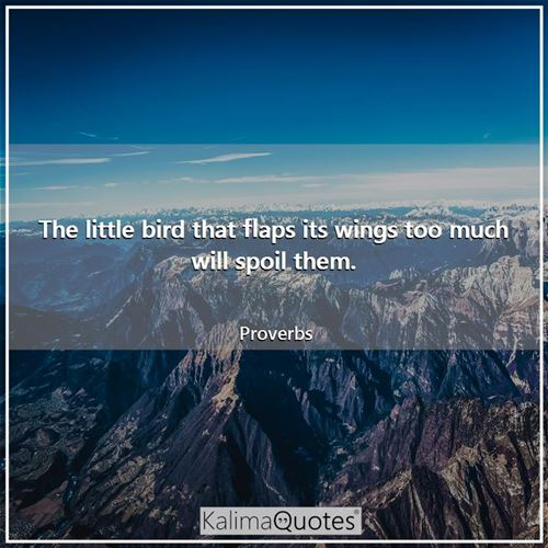 The little bird that flaps its wings too much will spoil them.