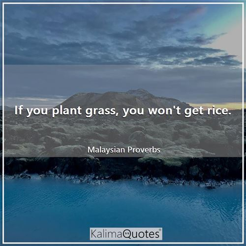 If you plant grass, you won't get rice.