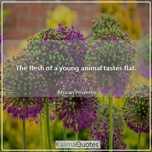 The flesh of a young animal tastes flat.