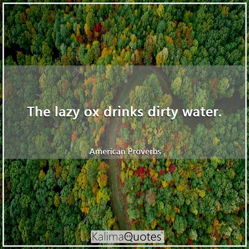 The lazy ox drinks dirty water.