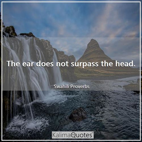 The ear does not surpass the head.