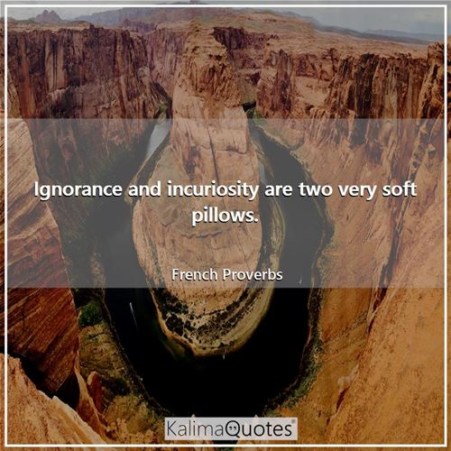 Ignorance and incuriosity are two very soft pillows.