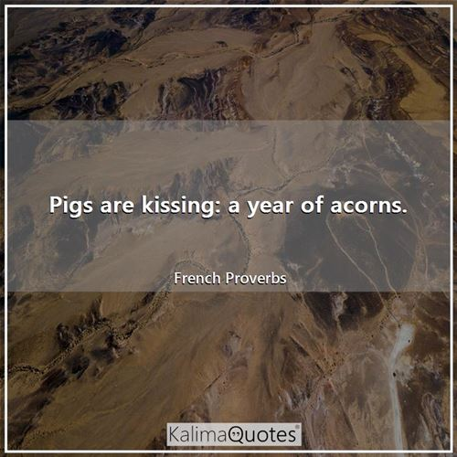 Pigs are kissing: a year of acorns. - French Proverbs