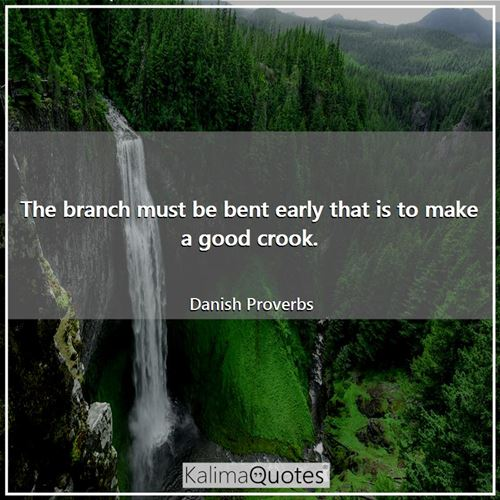 The branch must be bent early that is to make a good crook.