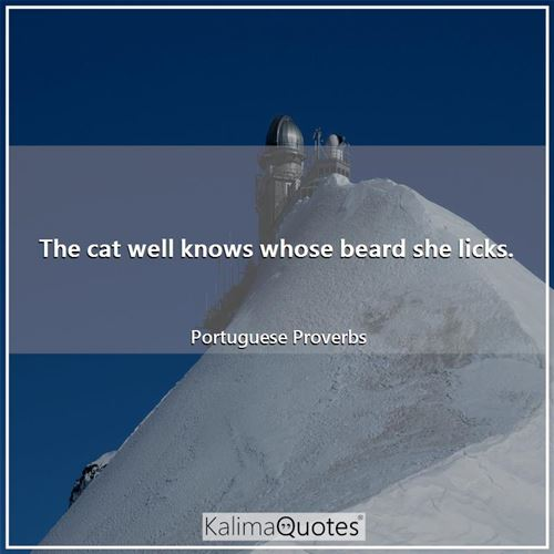 The cat well knows whose beard she licks.