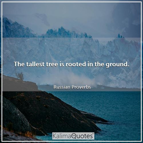 The tallest tree is rooted in the ground.