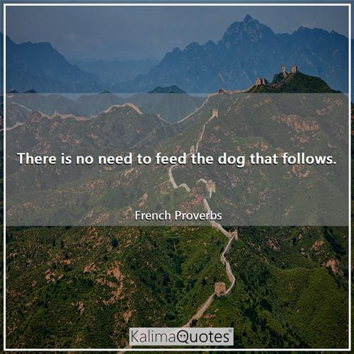 There is no need to feed the dog that follows.