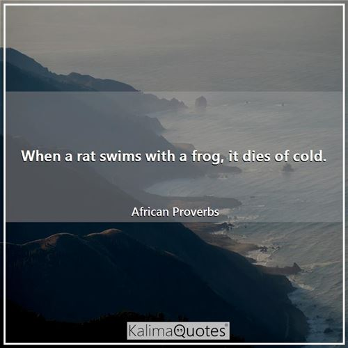 When a rat swims with a frog, it dies of cold. - African Proverbs