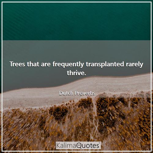 Trees that are frequently transplanted rarely thrive.