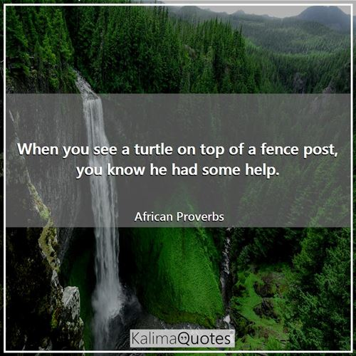 When you see a turtle on top of a fence post, you know he had some help. - African Proverbs