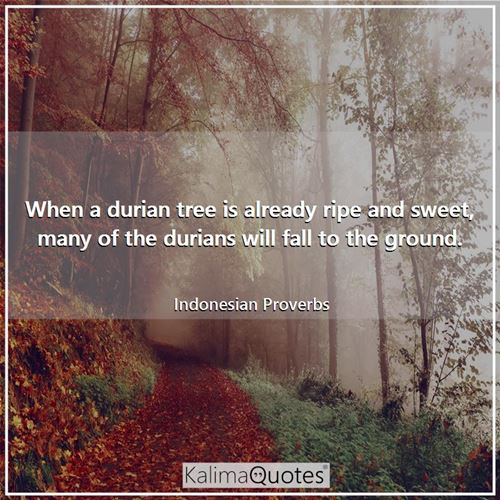 When a durian tree is already ripe and sweet, many of the durians will fall to the ground.