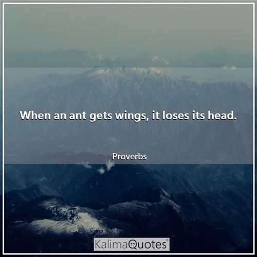 When an ant gets wings, it loses its head. - Proverbs