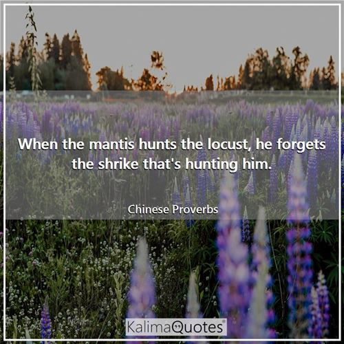 When the mantis hunts the locust, he forgets the shrike that's hunting him. - Chinese Proverbs