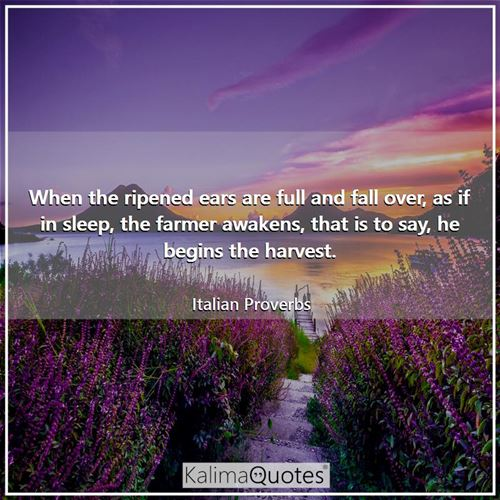 When the ripened ears are full and fall over, as if in sleep, the farmer awakens, that is to say, he begins the harvest.