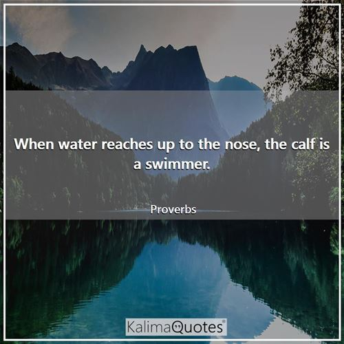 When water reaches up to the nose, the calf is a swimmer. - Proverbs