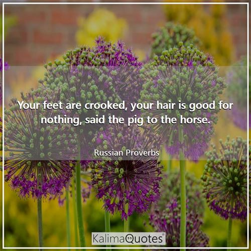 Your feet are crooked, your hair is good for nothing, said the pig to the horse.
