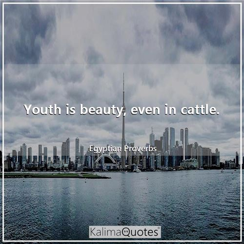 Youth is beauty, even in cattle.