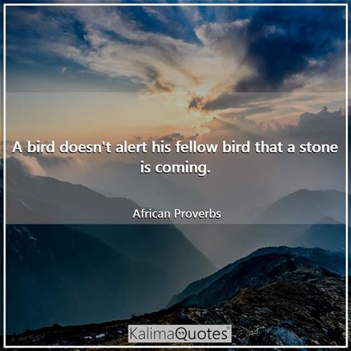 A bird doesn't alert his fellow bird that a stone is coming. - African Proverbs