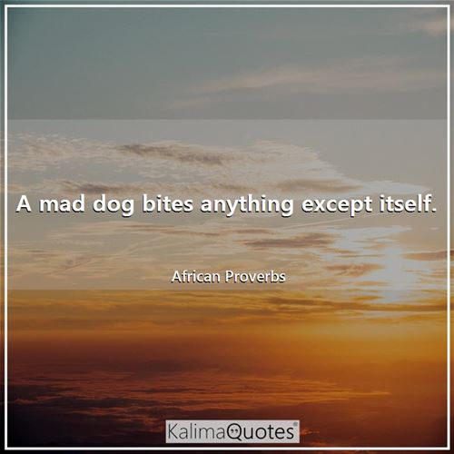 A mad dog bites anything except itself. - African Proverbs