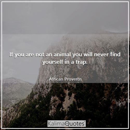 If you are not an animal you will never find yourself in a trap. - African Proverbs