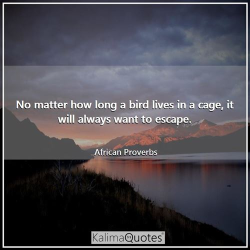 No matter how long a bird lives in a cage, it will always want to escape.