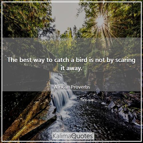The best way to catch a bird is not by scaring it away.