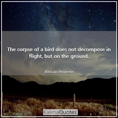 The corpse of a bird does not decompose in flight, but on the ground. - African Proverbs