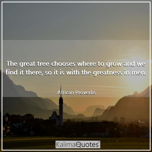 The great tree chooses where to grow and we find it there, so it is with the greatness in men. - African Proverbs